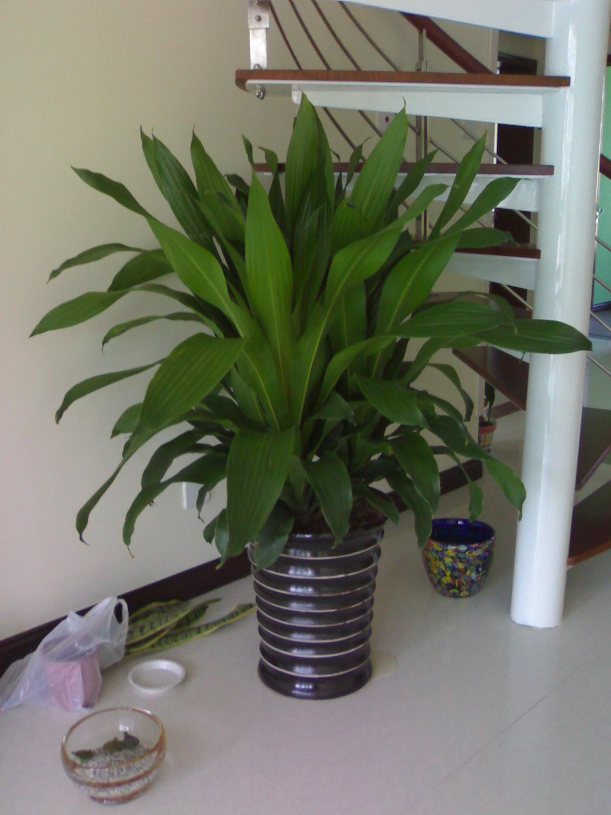 写字楼绿化租摆养护-室内观赏植物-上海春萱园艺有限